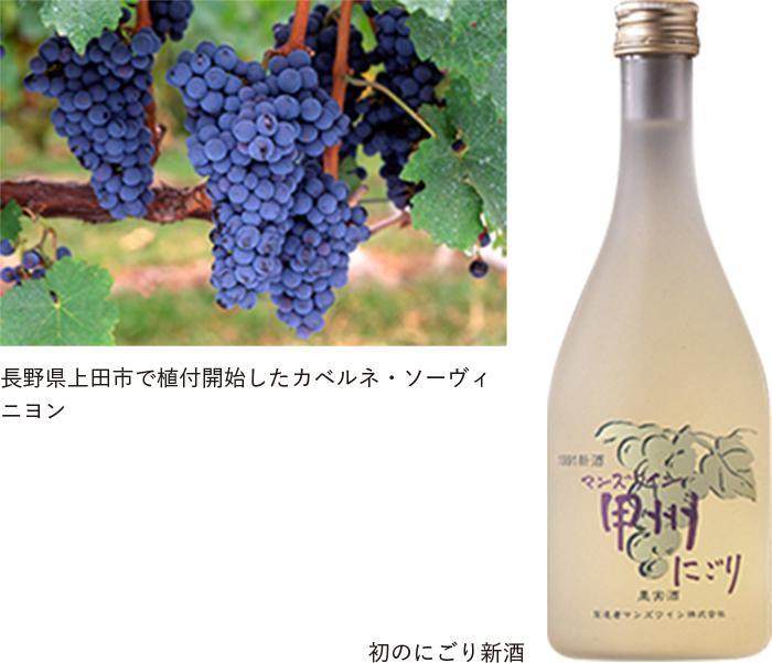 長野県上田市で植付開始したカベルネ・ソーヴィニヨン / 初のにごり新酒