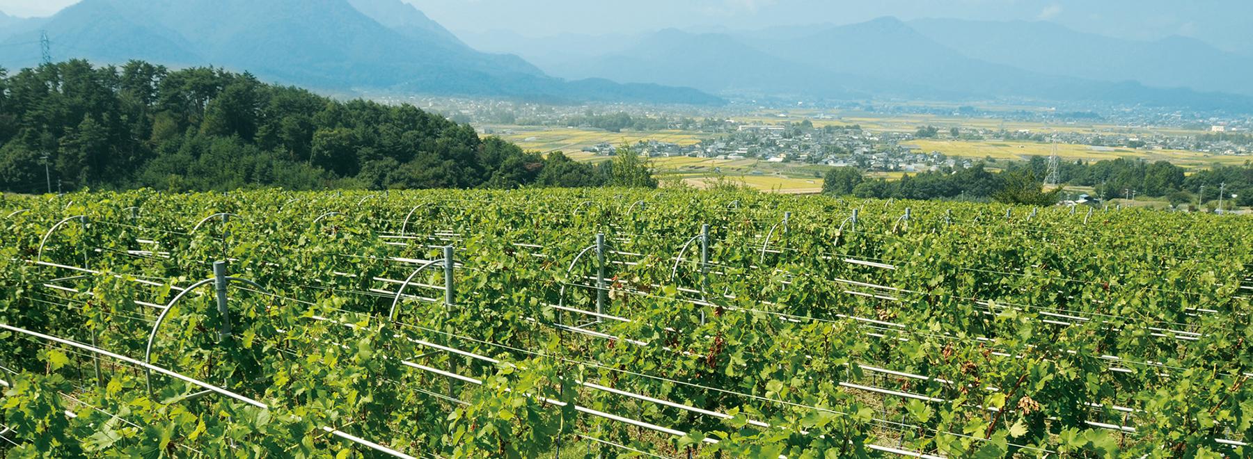 マンズワインがぶどう栽培の適地として選んだ長野県上田市塩田平東山地区