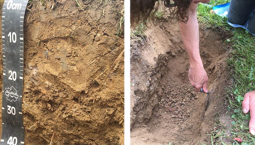 粘土質の複雑な土壌を掘り起こせば、海底だったことを物語る丸い小石がたくさん出土する